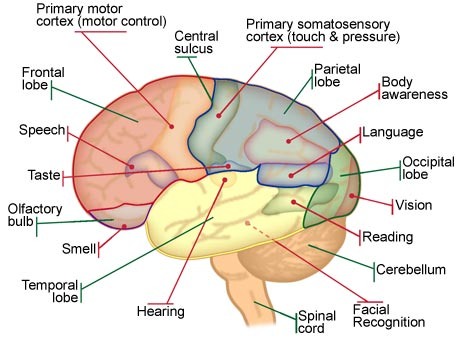 Activities to exercise your brain picture ccuart Image collections